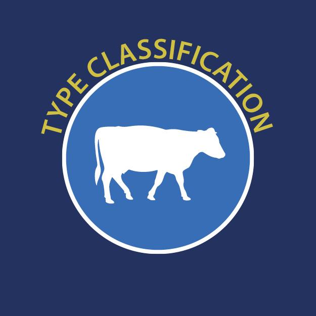 Holstein UK - Type Classification